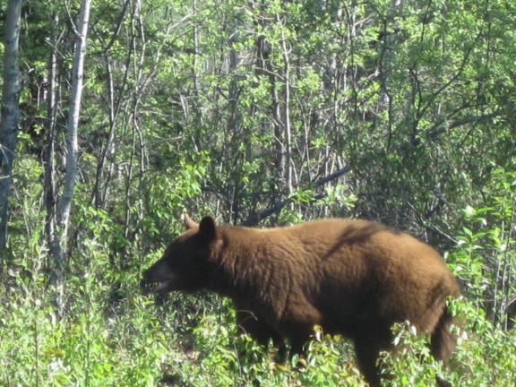 Bear 2013 c (3)